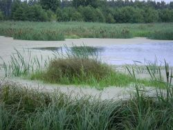 Wiedervernässter Flusstalpolder: Trebeltal bei Beestland (A.Rolfs)