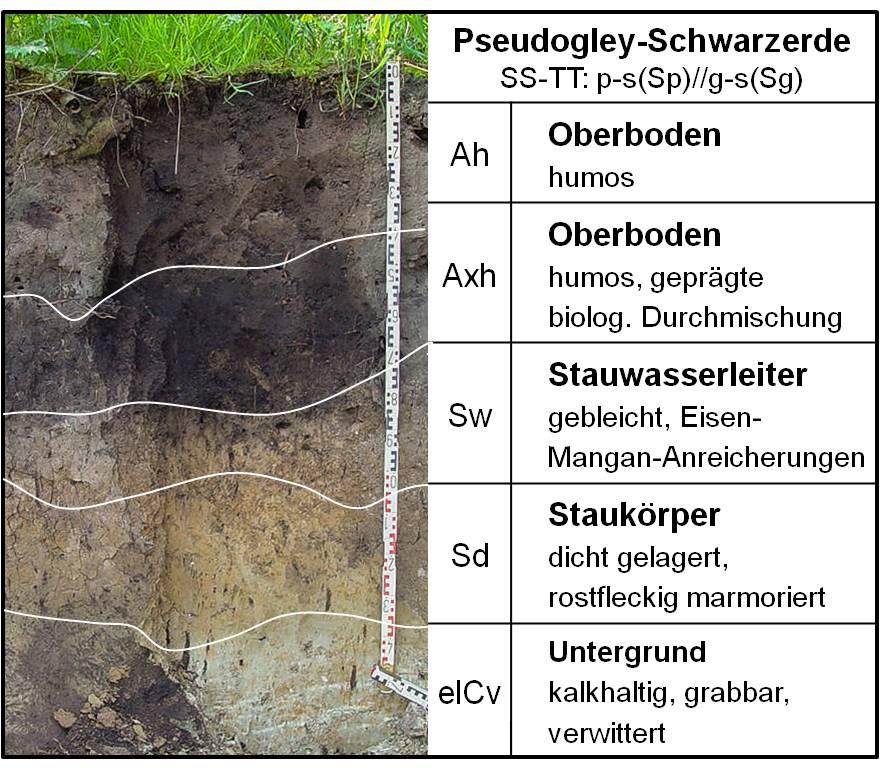 Boden des Jahres 2005 - Profil
