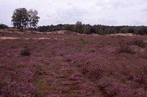 Naturschutzgebiet Bretziner Heide (H. Karl)