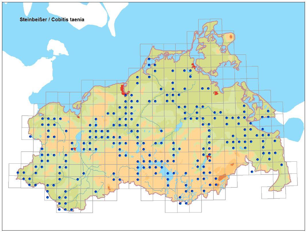 Verbreitung des Steinbeißers in Mecklenburg-Vorpommern 1990-2011 (Kartenerstellung LUNG unter Verwen