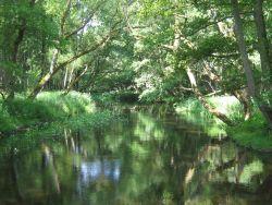 Fließgewässer (A. Abdank)