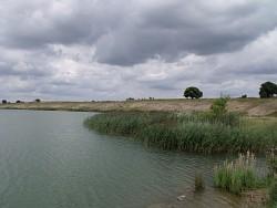 Schilf eines rekultivierten Uferstreifens am ehemaligen Kiesabbau bei Wusseken (LK Vorpommern/Rügen)