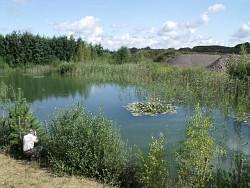 Rekultivierter Baggersee bei Zirkow (LK Vorpommern/Rügen)
