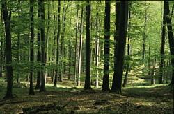 Hütter Wohld südlich von Bad Doberan (H. Karl)