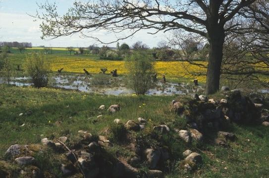 Überflutete Moorfläche am Anklamer Stadtbruch (H. Karl)