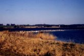 Großer Haken<BR>Insel Vilm
