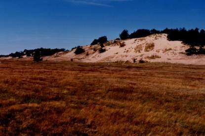Wanderdünenkomplex nahe Klein Schmölen bei Dömitz