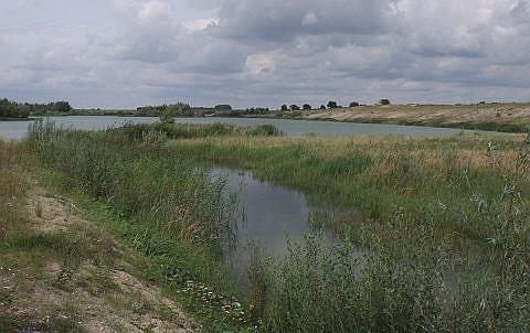 Im Rahmen der Rekultivierung wurden weite, flache und vegetationsfreie Uferbereiche, ohne Abraum- oder Mutterbodenbedeckung geschaffen.
