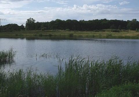 Durch Abtrennung mehrerer kleiner Buchten und Lagunen und separaten Flachwasserbereichen wurde ein vielfältiges Biotop geschaffen. Die Uferlinie wurde geschwungen und wechselweise mit Gebüsch und Bäumen gestaltet.