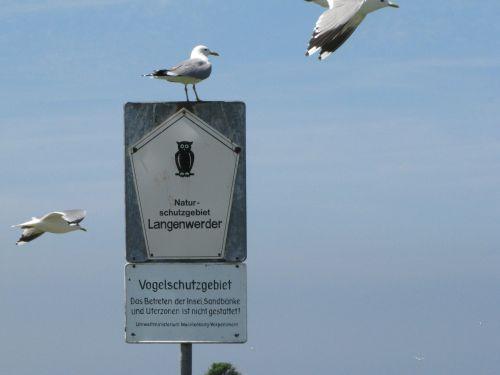 Sturmmöwen Vo-gelschutzgebiet Wismarbucht (C. Herrmann)